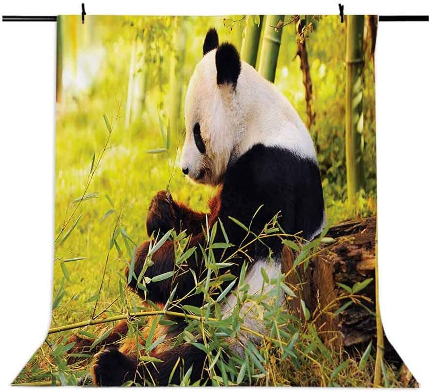 Panda 6.5x10 FT Backdrop Photographers,Big Panda Sitting Forest Eating Bamboo Tree Trunk Foliage Wilderness Picture Print Background for Baby Birthday Party Wedding Vinyl Studio Props Photography