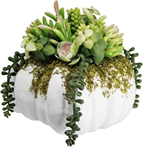 """winemana Thanksgiving Decorations Pumpkin with Artificial Succulents, 8.8"""" x 8.2"""" White Foam Pumpkin and Plastic Succulents Fall Autumn Decor for Office Bedroom Kitchen Thanksgiving Party Harvest Day"""