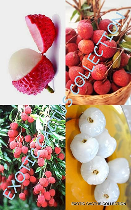 Amazon Com Lychee Fruit Sweet Litchi Chinensis Tropical Exotic
