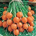 Parisian Carrot Seeds - Non-GMO, Heirloom Vegetable Garden Seeds - Gardening - Mountain Valley Seeds