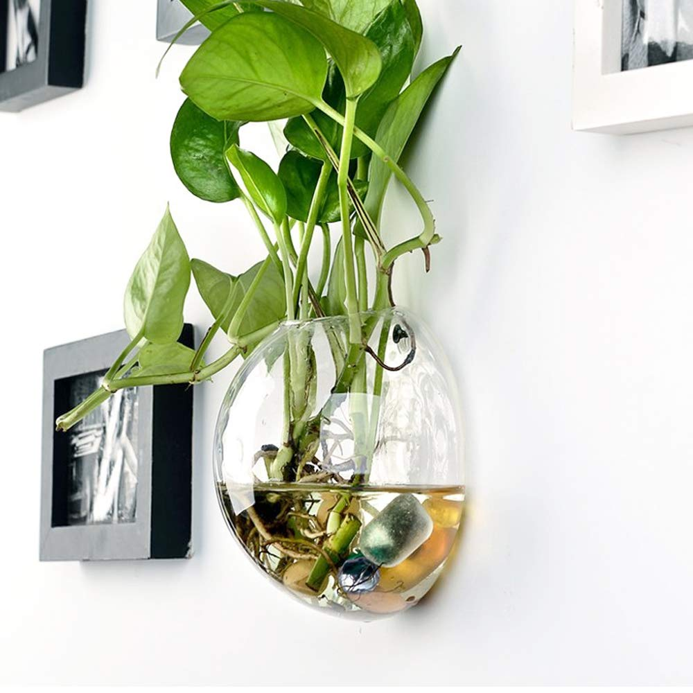 Sfeexun 4 Pcs Wall Hanging Glass Planters 4 Inches Diameter Round Glass Plant Pot - Water Planting Vases Air Flower Vase Plant Terrariums Plant Container (6 Pcs) by Sfeexun (Image #2)