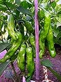 "Shishito Sweet Wrinkled Old Man Pepper Plant - Mild - 3"" Pot"