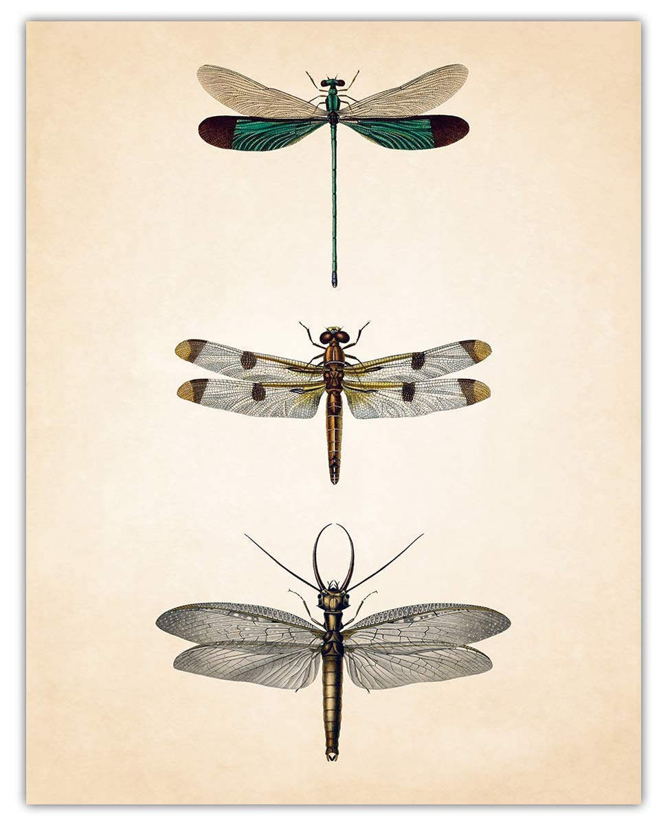 Vintage Dragonflies Wall Art Print - (11x14) Photo Unframed Make Great Room Wall Decor Gift Idea Under $15