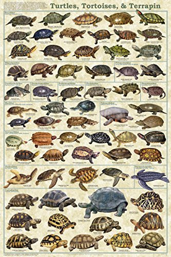 Turtles, Tortoises, & Terrapin Educational Science Animal Chart Print Poster 24x36 by Picture - Tortoise Pictures
