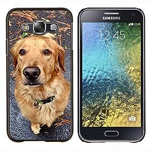 YiPhone /// Prima de resorte delgada de la cubierta del caso de Shell Armor - Golden Retriever caída del otoño Familia del perro - Samsung Galaxy E5 E500