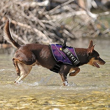 PETKIT HA8OBLS arnés de compresión de Aire para Perro, pequeño ...