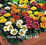 Superior Gazania Flower Seeds Promotion!!! 24 Types 50pcs Rare Gazania Seeds for Garden Home & Garden Flores indoor Plants