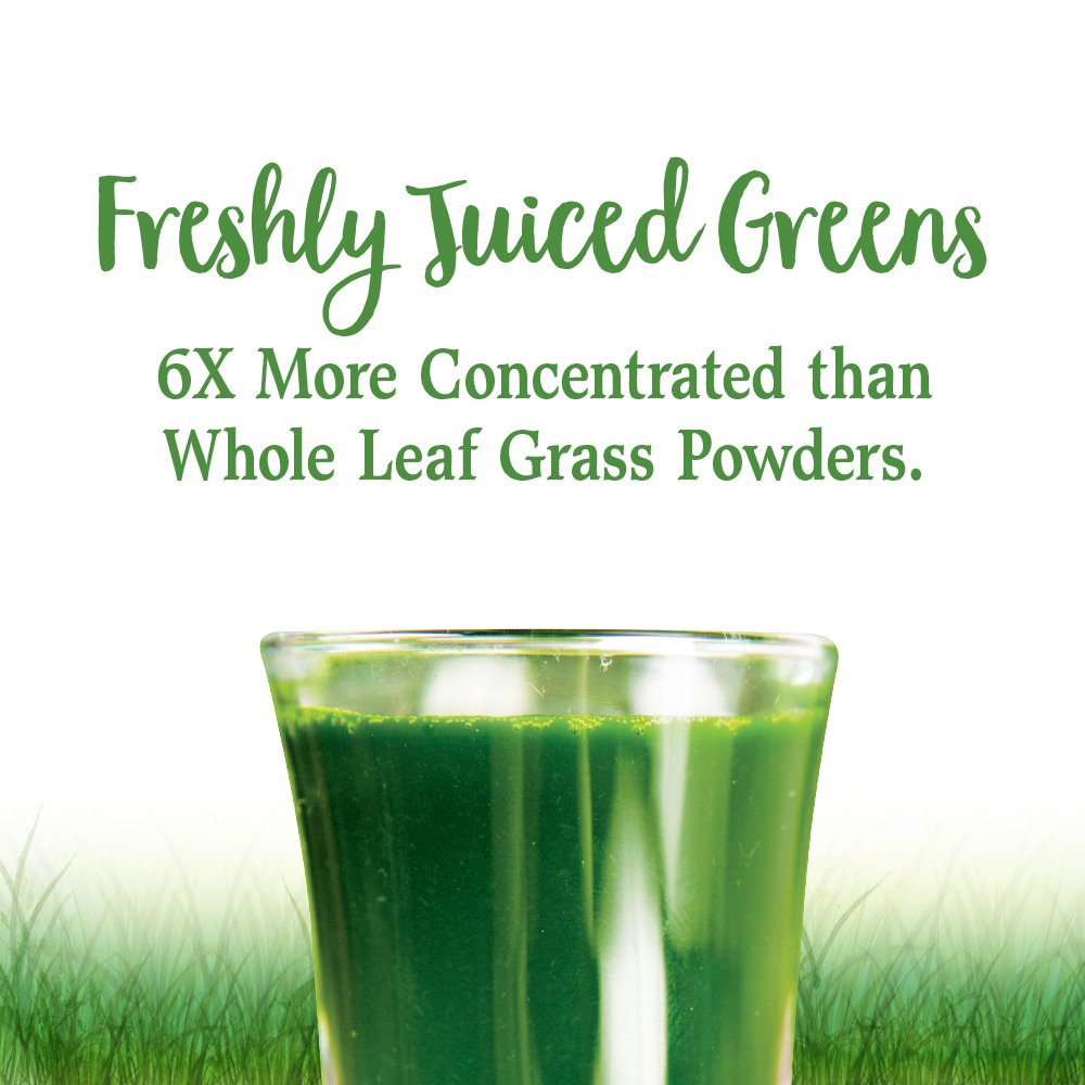 Garden of Life Vegan Green Superfood Powder - Raw Organic Perfect Whole Food Dietary Supplement, Original, 7.4oz (209g) Powder by Garden of Life (Image #3)