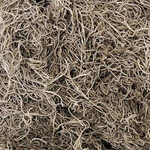 Live Spanish Moss (1 Gallon Bag South Florida)