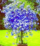 Kasuki 100 Pcs Plumbago Auriculata Bonsai Exotic Perennial Flowers Bonsai Home Garden Decor Plant Ceratostigma Plumbaginoides Bonsai - (Color: c)