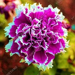 200 PC / Bolsa de petalos dobles Petunia Semillas Semillas Bonsai flores corto Altura jardín de flores Semillas de plantas de interior o al aire libre Brown