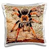 3dRose pc_140139_1 Mexican Painted Leg Tarantula, Spider Na02 Dno0853 David Northcott Pillow Case, 16'' x 16''