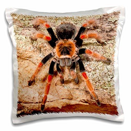 3dRose pc_140139_1 Mexican Painted Leg Tarantula, Spider Na02 Dno0853 David Northcott Pillow Case, 16
