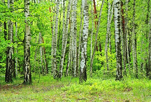 OFILA Birch Forest Backdrop 7x5ft Photography Backdrop Green Trees Grass Land Nature Landscape Interior Decoration Party Background Little Girls Portraits Kids Toddlers Shoots Video Studio Props