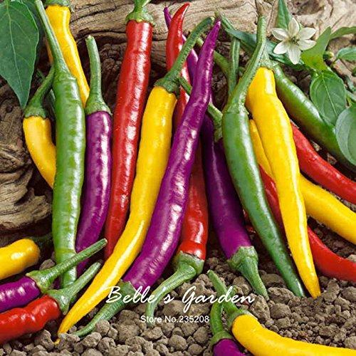 50pcs Blend Cayenne Seeeds Organic Pepper Seeds Non-Gmo Vegetable Garden Seeds Home Garden Bonsai Plant #E38 (Vegetable Seeeds)