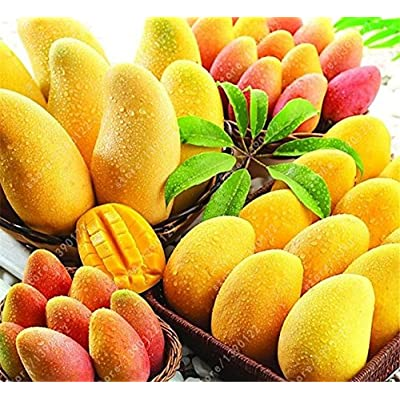 HOO PRODUCTS - 2 pcs/bag mango seeds, mini mango tree seeds, bonsai tree seed, Organic heirloom fruit seeds, pot plant for home garden Cheap! : Garden & Outdoor