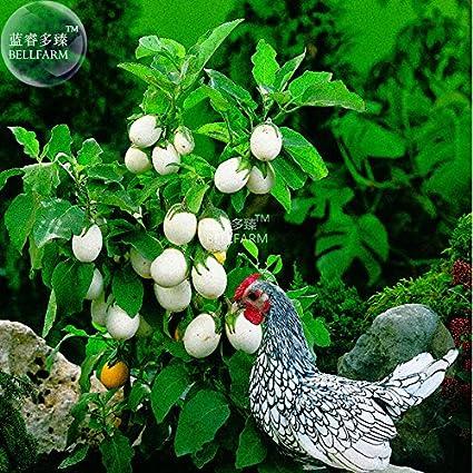 Amazoncom 2018 Hot Sale Davitu Easter Egg Eggplant White Patio