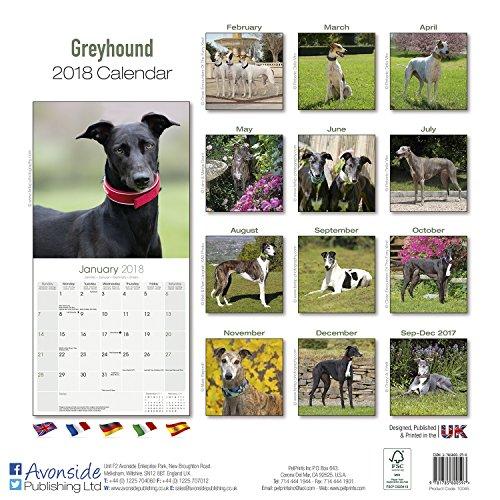 The 8 best greyhound items