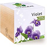 Feel Green Ecocube Violet Flower, Certified Organic, Grow Your Own Kit, Sustainable & Unusual Gift (100% Eco Friendly), Plant in A Wooden Cube, Made in Austria