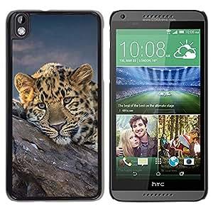 TopCaseStore / la caja del caucho duro de la cubierta de protección de la piel - African Cheetah Big Cat - HTC DESIRE 816