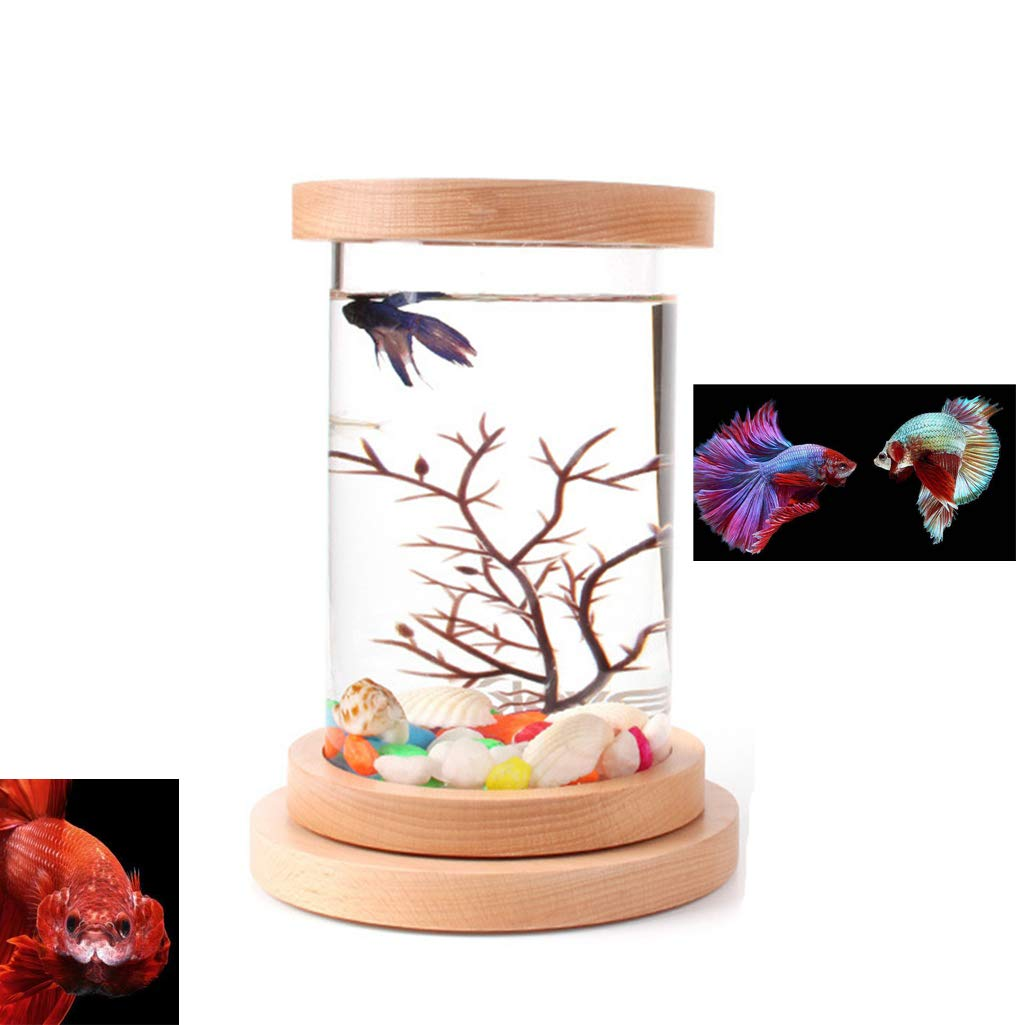 WXJHA Betta Aquarium Fish Tank,Fish Tank Betta Cylinder Starter Kits with LED Light,360 Degree Rotatable Creative Betta Fish Tank,Aquarium Starter Kit with Base by WXJHA