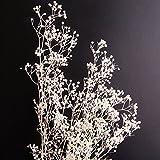 そらプリ プリザーブドフラワー カスミ草 hana oil ハーバリウム用 大地農園 (カスミ草, 白)