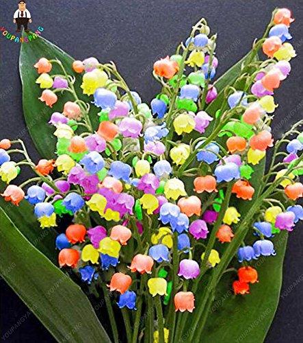 100pcs Muguet Graines de fleurs rares Indoor de Bell Orchid Seeds arôme  riche Bonsai Fleurs graines