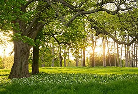 Huge Mossy Tree Backdrop 10x6.5ft Polyester Photography Background Forest Mighty Trees Curly Branches Backdrop Prop Greenery Wood Scout Summer Camp Journey Holiday Nature Scenery Landscape