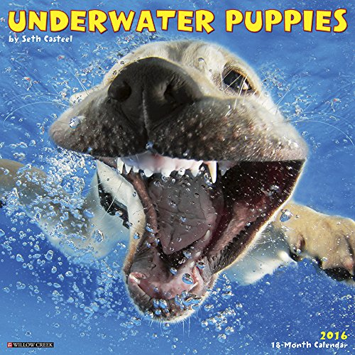 2016 Underwater Puppies Wall Calendar product image