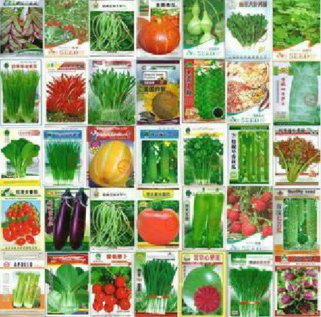 SALE! 100pcs Vegetable seeds wholesale and different vegetable seed family potted balcony garden four seasons pl