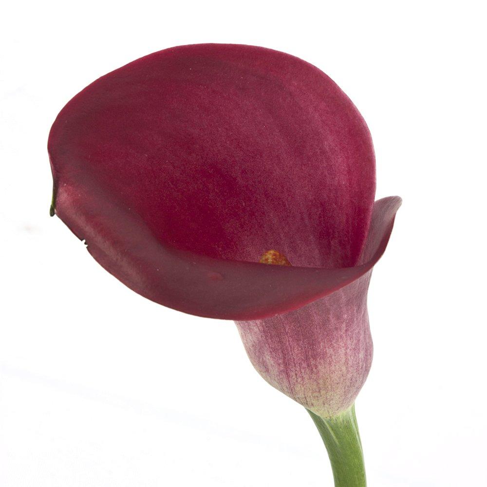 Wholesale Mini Calla Lilies (60 Purple)