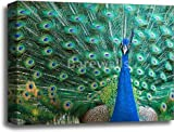 barewalls Beautiful Peacock Gallery Wrapped Canvas Art (16in. x 20in.)