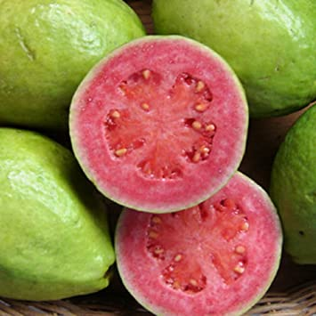 Pictures Of Guava Fruit