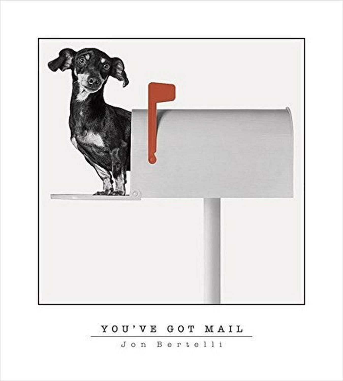 Buyartforless Dachshund Weiner Dog - You've Got Mail by Jon Bertelli 20x18 Art Print Poster Wall Decor Black and White Photograph of Dog in A Mailbox