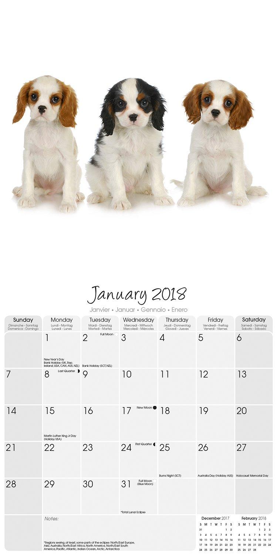 Cavalier king charles spaniel calendar dog breed calendars 2018 cavalier king charles spaniel calendar dog breed calendars 2018 dog calendar calendars 2017 2018 wall calendars 16 month wall calendar by avonside nvjuhfo Choice Image