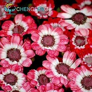 100 Pcs Seagrass Seeds Beautiful Like Onion Flower Sementes For Home Garden Rare Miniature Semi Bonsai Jardin Plants