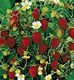 Temptation Strawberry 50 Seeds Grow These Lucious Berries Every Year After Year