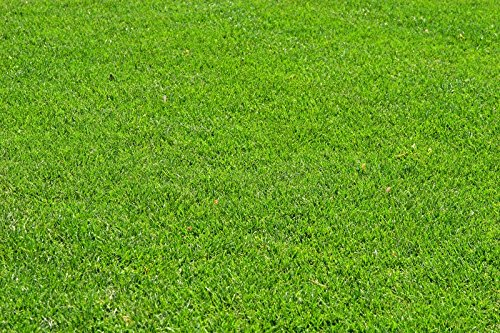 Creeping Red Fescue Green Lawn Fully Tested, Quick Germination Festuca Rubra (25 LB) by OrOlam (Image #5)