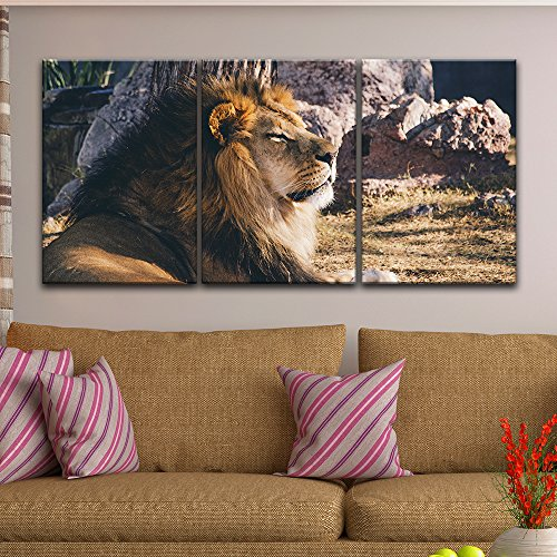 3 Panel A Lion Lying in the Wild Gallery x 3 Panels