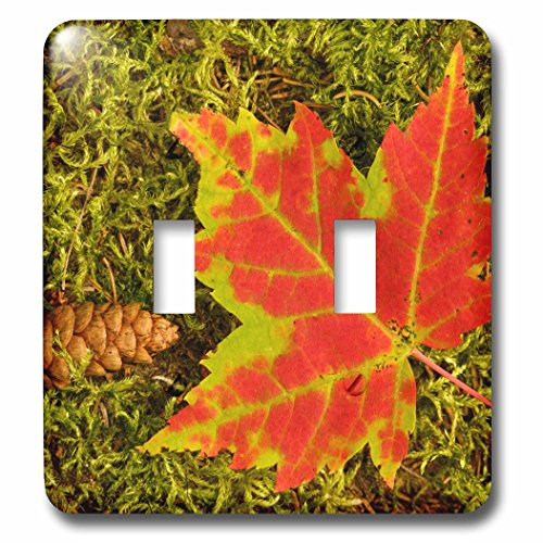 nt - Botanical - Maple leaf and pine cone on moss, Upper Peninsula, Michigan. - Light Switch Covers - double toggle switch (lsp_259490_2) ()