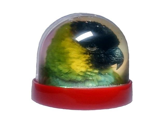 Nanday Conure Red Glitter Dome/ Snow Globe (PG-0836): Amazon