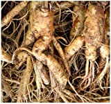 Chinese Ginseng - Panax ginseng Seeds - ?? MEDICINAL & HERBAL - Cold Hardy To Zone 6 - By MySeeds.Co (010 Seeds - 10 Seeds - Pkt. Size)