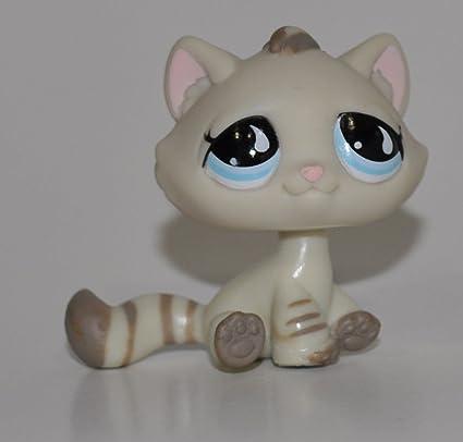 Amazon.com: Gatito # 563 (Bronceado, ojos azules, rayas en ...