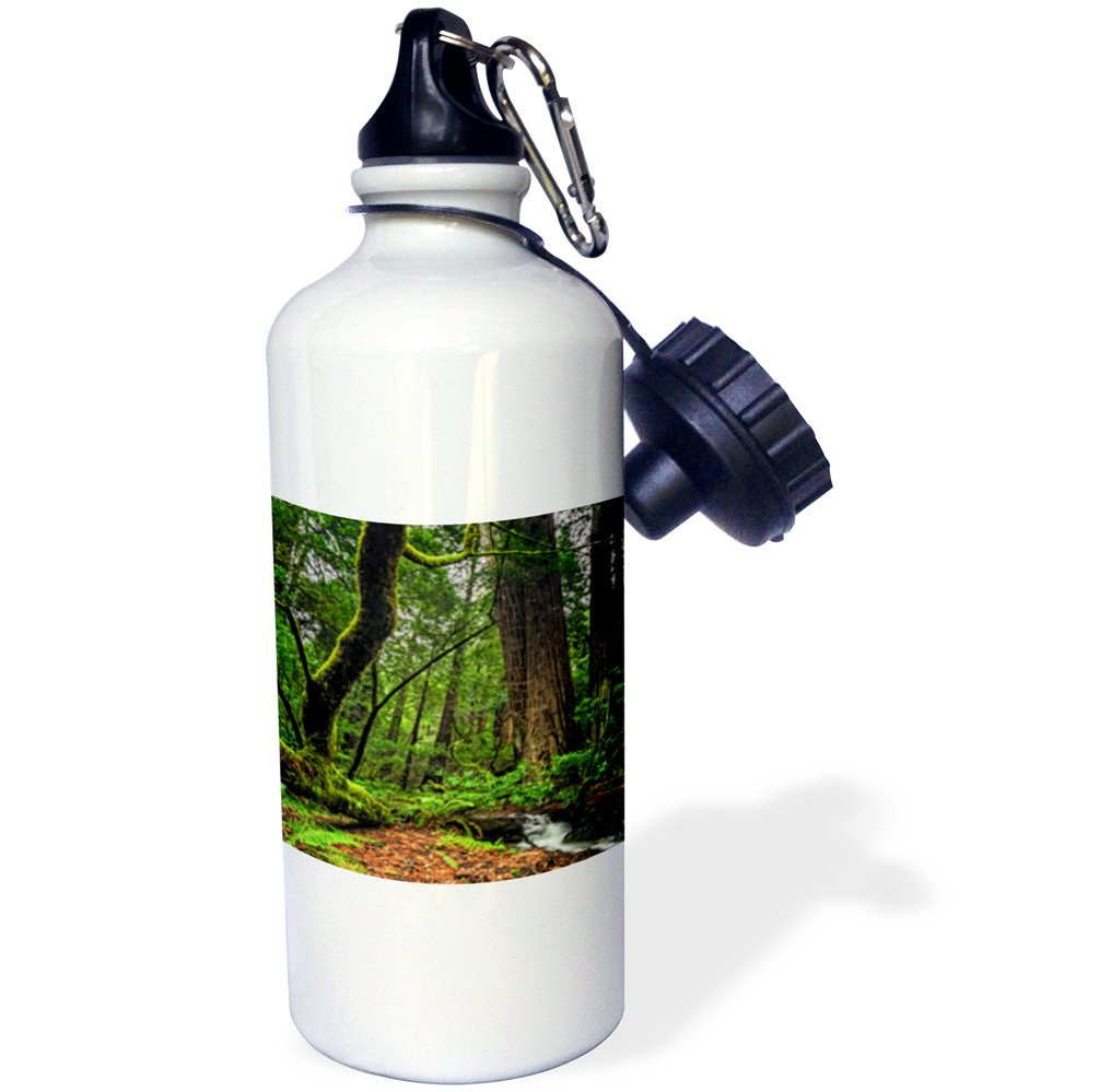 3dRose Muir Woods and Small Stream-Sports Water Bottle 21oz wb/_203946/_1 21 oz Multicolored