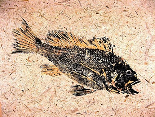 Matt Black 38 Ink - Black Sea Bass GYOTAKU fish Art print 8.5 X 11 inch by Barry Singer. Beach House Picture Cottage décor
