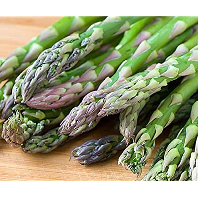 25 Asparagus Roots Jersey Supreme - Male Dominate - Tasty - No GMOs : Asparagus Plants : Garden & Outdoor