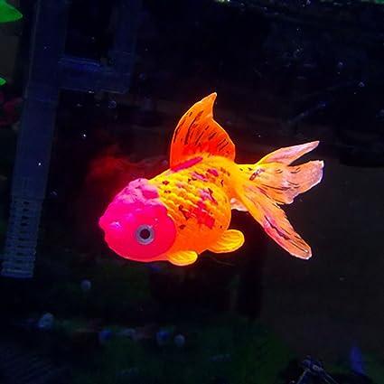 Handfly - Adorno artificial para acuario o pecera de oro, decoración de tanque de peces, 1 unidad: Amazon.es: Hogar