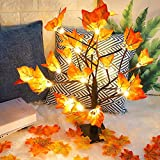 CEWOR Thanksgiving Lighted Maple Tree with 100pcs Maple Leaves Light up Table Centerpiece Decoration 1.8ft 24 LED for Home Indoor Harvest Thanksgiving Party Gifts