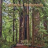 Search : California Redwoods Calendar 2019