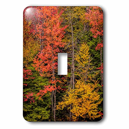 3dRose lsp_231315_1 USA, New York, Adirondack Mountains. Autumn-colored trees Toggle Switch